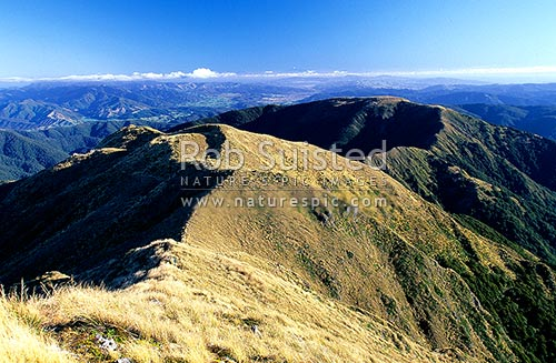 Quion Ridge, the Hutt Valley and Wellington from Mount (Mt) Alpha (1361m). Kaikoura Mountains in distance!, Tararua Forest Park, Upper Hutt City District, Wellington Region, New Zealand (NZ) stock photo.