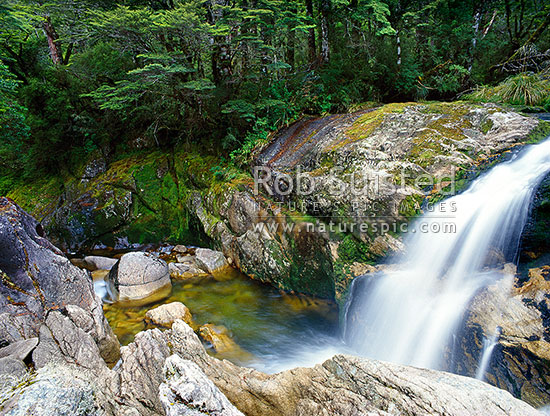 Lake stream running through beech forest, Victoria Range, Victoria Forest Park, Buller District, West Coast Region, New Zealand (NZ) stock photo.