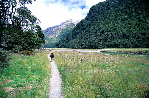 Tramper on the Routeburn Flats; Routeburn Great Walk track, Mount Aspiring National Park, Queenstown Lakes District, Otago Region, New Zealand (NZ) stock photo.