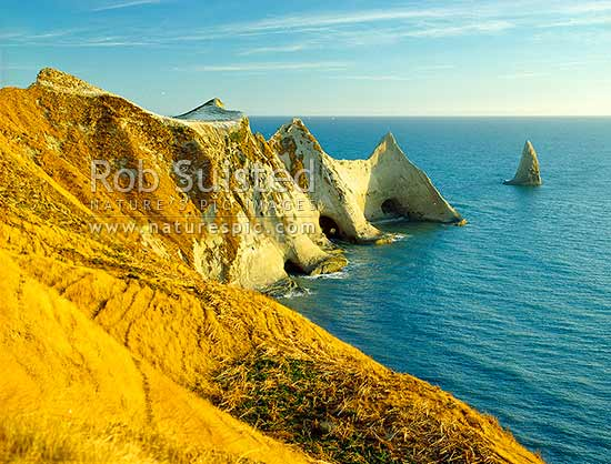 Cape Kidnappers in early morning. Saddle Gannet colony visible on plateau, Hawke's Bay, Hastings District, Hawke's Bay Region, New Zealand (NZ) stock photo.