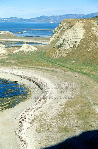 The Kaikoura Peninsula Coastal Walkway. People walking in distance, Kaikoura, Kaikoura District, Canterbury Region, New Zealand (NZ) stock photo.