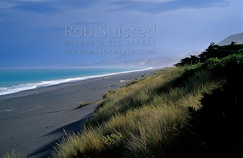 Secluded beach on the Kaikoura Coast, Marram grass (Ammophila arenaria), Kaikoura, Kaikoura District, Canterbury Region, New Zealand (NZ) stock photo.