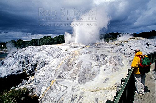 The famous 'Pohutu' Geyser at the NZ Maori Arts and Crafts Institute. Te Whakarewarewa Thermal Valley, Rotorua, Rotorua District, Bay of Plenty Region, New Zealand (NZ) stock photo.