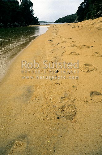 Footprints on sandy beach, Stewart Island, Stewart Island District, Southland Region, New Zealand (NZ) stock photo.