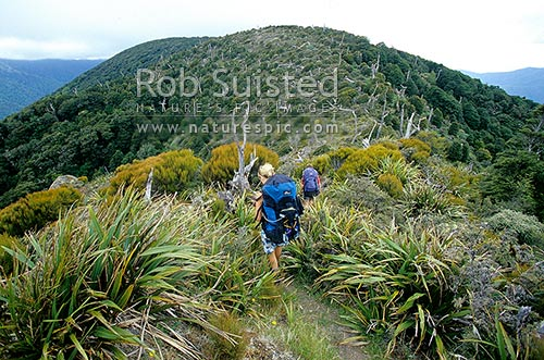 Tramping through the 'burn' (old forest fire scar) on Marchant Ridge, Tauherenikau River valley right, Eastern Hutt Valley left, Tararua Forest Park, New Zealand (NZ) stock photo.