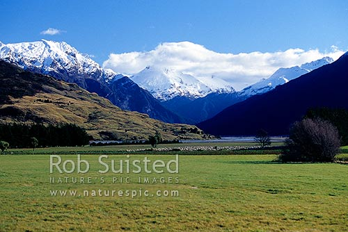 Looking across sheep and pasture to the Wilkin River and Mount (Mt) Aeolus (2301m). Winter, Makarora, Queenstown Lakes District, Otago Region, New Zealand (NZ) stock photo.