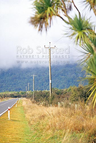 State Highway 6 near Fox Glacier. Line of power poles and power lines. Native forest in cloud, Fox Glacier, Westland District, West Coast Region, New Zealand (NZ) stock photo.