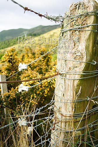 Old farm fence post - strainer post, New Zealand (NZ) stock photo.