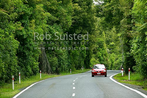 Hongi's Track road through podocarp forest between Lake Rotoiti and Lake Rotoehu, Rotorua, Rotorua District, Bay of Plenty Region, New Zealand (NZ) stock photo.