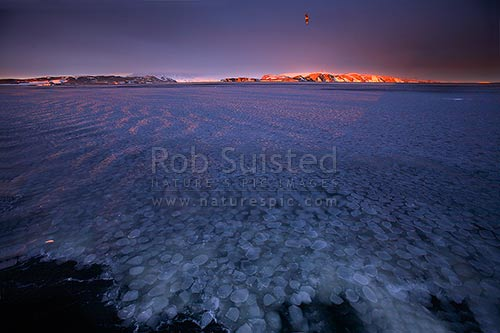 Pancake ice and grease ice at sunset in Terra Nova Bay, Ross Sea. Inexpressible Island beyond and South Polar Skua above (Catharacta maccormicki), Ross Sea, Antarctica District, Antarctica Region, Antarctica stock photo.
