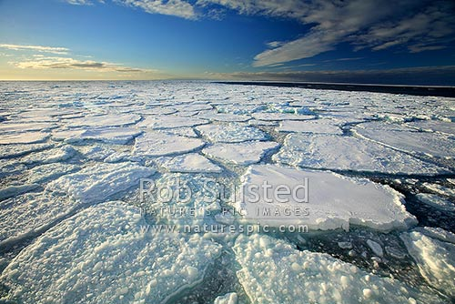 Close pack ice and brash ice in front of open sea, Ross Sea, Antarctica Region, Antarctica stock photo.