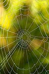 Spiders web and dew