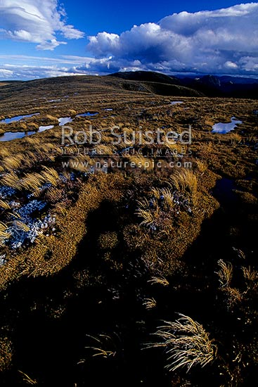 Clearing storm reflected in alpine tarns on tussock tops of the Main Range, Ruahine Forest Park, Rangitikei District, New Zealand (NZ) stock photo.