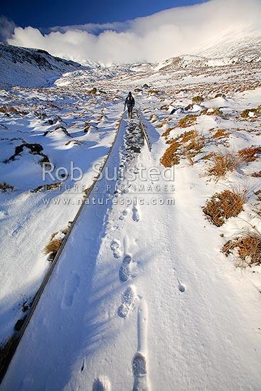 towards the snowy - photo #6