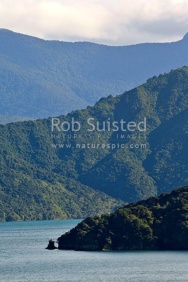 Forest covered hills in Queen Charlotte Sound, Marlborough Sounds, Marlborough District, Marlborough Region, New Zealand (NZ) stock photo.
