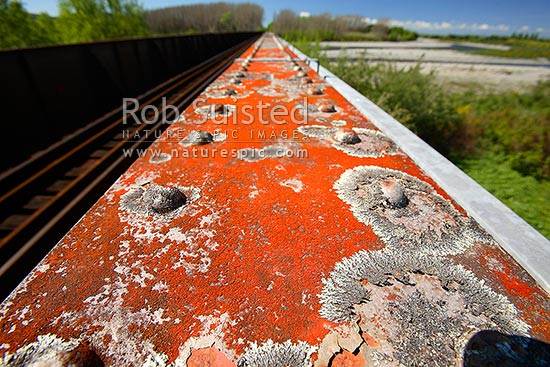 Lichen growing on steel railway bridge and rails crossing the Waiohine River, Greytown, South Wairarapa District, Wellington Region, New Zealand (NZ) stock photo.