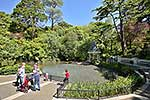 Duck Pond, Botanical Gardens