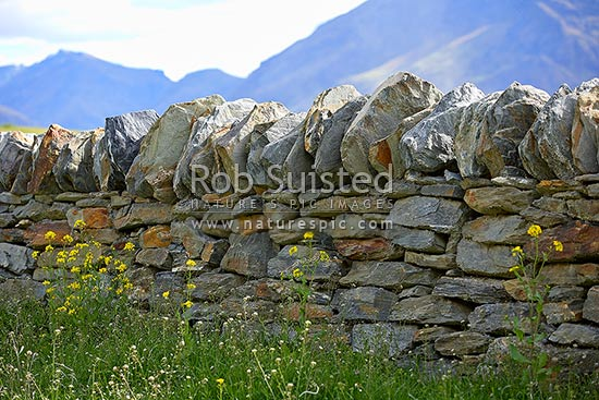 Dry stonewall fence made of Otago schist slab rock, Queenstown, Queenstown Lakes District, Otago Region, New Zealand (NZ) stock photo.