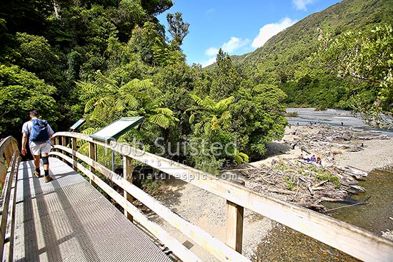Trampers/hikers and day walkers on the Turere Stream bridge on the Orongorongo Valley Track (Remutaka, Rimutaka), Remutaka Forest Park, Hutt City District, Wellington Region, New Zealand (NZ) stock photo.