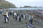 King Penguins on seashore