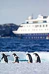 Penguins on ice, ship beyond