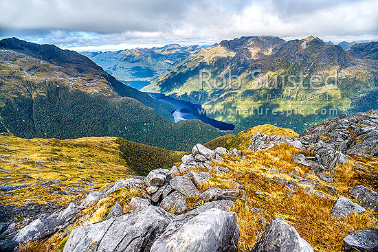 Granite rock outcrops on ridge high above the North Fiord of Lake Te Anau and the Glaisnock River Valley, on alpine tussock tops. Franklin Mountains, Fiordland National Park, Southland District, Southland Region, New Zealand (NZ) stock photo.