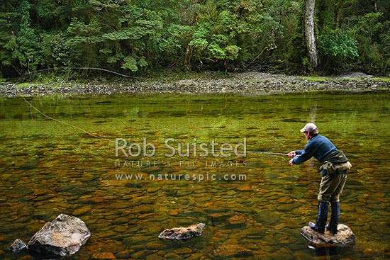 Trout fisherman flyfishing in the Glaisnock River, Fiordland National Park, Southland District, Southland Region, New Zealand (NZ) stock photo.