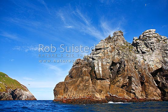 Daption Rocks stack off the North Promontory of the Snares main island, Snares Islands, NZ Sub Antarctic District, NZ Sub Antarctic Region, New Zealand (NZ) stock photo.