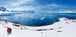 Antarctic visitors panorama