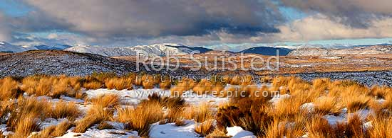 Desert Road winter panorama looking across the Moawhango Army tussocklands with snow in the red tussock grasses (Chionochloa rubra). Kaimanawa Mountains and Rangitikei beyond, Waiouru, Ruapehu District, Manawatu-Wanganui Region, New Zealand (NZ) stock photo.