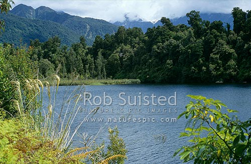 Lake Mapourika, Franz Josef, Westland District, West Coast Region, New Zealand (NZ) stock photo.