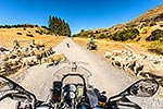 Motorcycle touring, Molesworth Road