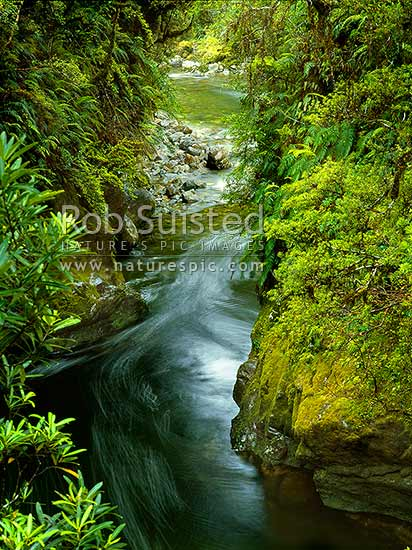 Looking into Monkey Puzzle Gorge, Martyr River, Cascade Valley, South Westland, South Westland, Westland District, West Coast Region, New Zealand (NZ) stock photo.