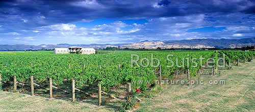 Fromm Winery in Marlborough, Marlborough, Marlborough District, Marlborough Region, New Zealand (NZ) stock photo.