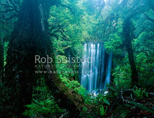 Korokoro Falls (22metres) on Te korokoroowhaitiri Stream, in light mist. Lake Waikaremoana great walk track, Te Urewera National Park, Wairoa District, Hawke's Bay Region, New Zealand (NZ) stock photo.